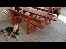 【海外発!Breaking News】「うちの犬なら歌えるはず」美声で自分の身元を証明した迷い犬、無事飼い主の元へ(イスラエル)<動画あり>