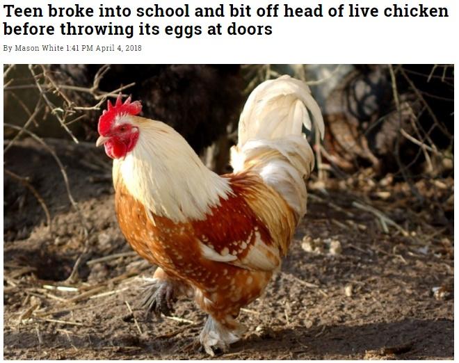 フロリダの17歳、ニワトリの頭を食いちぎる蛮行で逮捕(画像は『WorldWide Weird News 2018年4月4日付「Teen broke into school and bit off head of live chicken before throwing its eggs at doors」』のスクリーンショット)