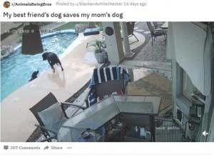 """【海外発!Breaking News】溺れそうな""""親友""""のため、プールに飛び込み救出した犬(米)<動画あり>"""