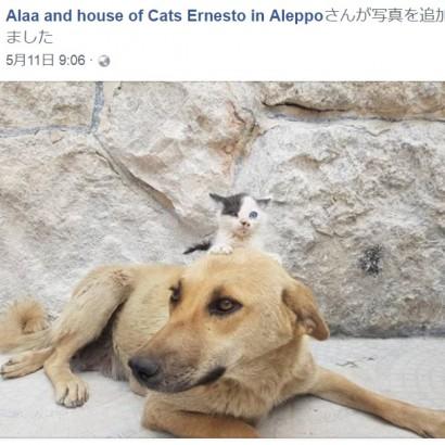 """【海外発!Breaking News】わが子を死産で失った母犬、親のいない仔猫の""""ママ""""に(シリア)"""