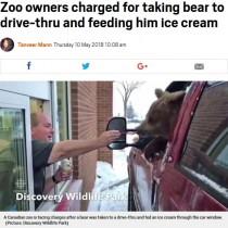 【海外発!Breaking News】クマを連れ出しドライブスルーへ カナダの動物園オーナーに批判殺到