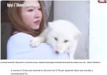 【海外発!Breaking News】ペットショップで購入した仔犬、10か月後にキツネと判明(中国)