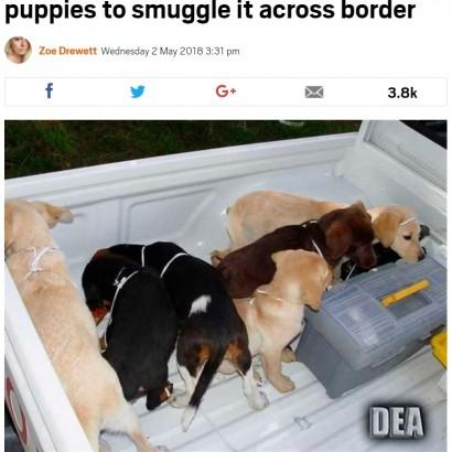 【海外発!Breaking News】生きた仔犬の体内にヘロインを忍ばせ密輸していた獣医(米)