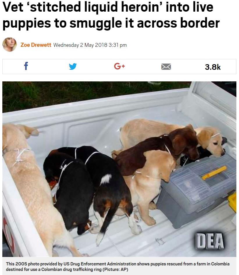 ドラッグ密輸のために飼われていた仔犬(画像は『Metro 2018年5月2日付「Vet 'stitched liquid heroin' into live puppies to smuggle it across border」(Picture: AP)』のスクリーンショット)