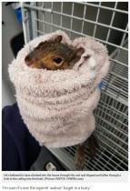【海外発!Breaking News】屋根の穴から真っ逆さま トイレに落ちたリス、救助される(英)
