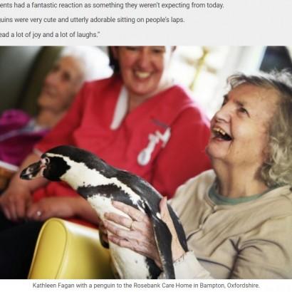 【海外発!Breaking News】認知症介護施設にペンギンがやって来る セラピーアニマルとして患者も笑顔に(英)