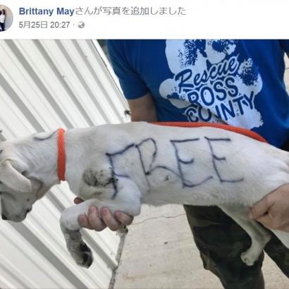 【海外発!Breaking News】生後5か月の仔犬の体に「タダ」と落書き 捨てた女逮捕される(米)