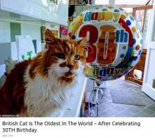 【海外発!Breaking News】世界一の長寿か 推定30歳の誕生日を迎えたイギリスの猫