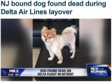 【海外発!Breaking News】デルタ航空乗客のペット犬、乗り継ぎの貨物施設で死亡(米)