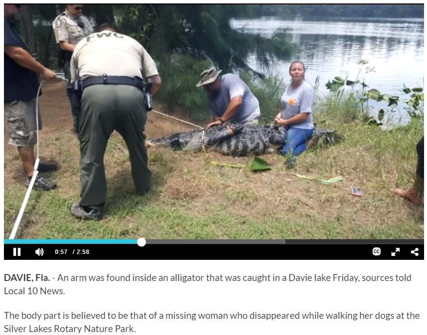 捕獲したワニの体内から被害者女性の腕が見つかる(画像は『WPLG Local 10 2018年6月9日付「Arm found inside alligator pulled from Davie lake; search for remains continues」』のスクリーンショット)