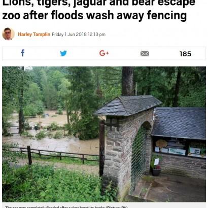【海外発!Breaking News】動物園で猛獣がフェンス外へと脱走 園外に出たクマは射殺(独)