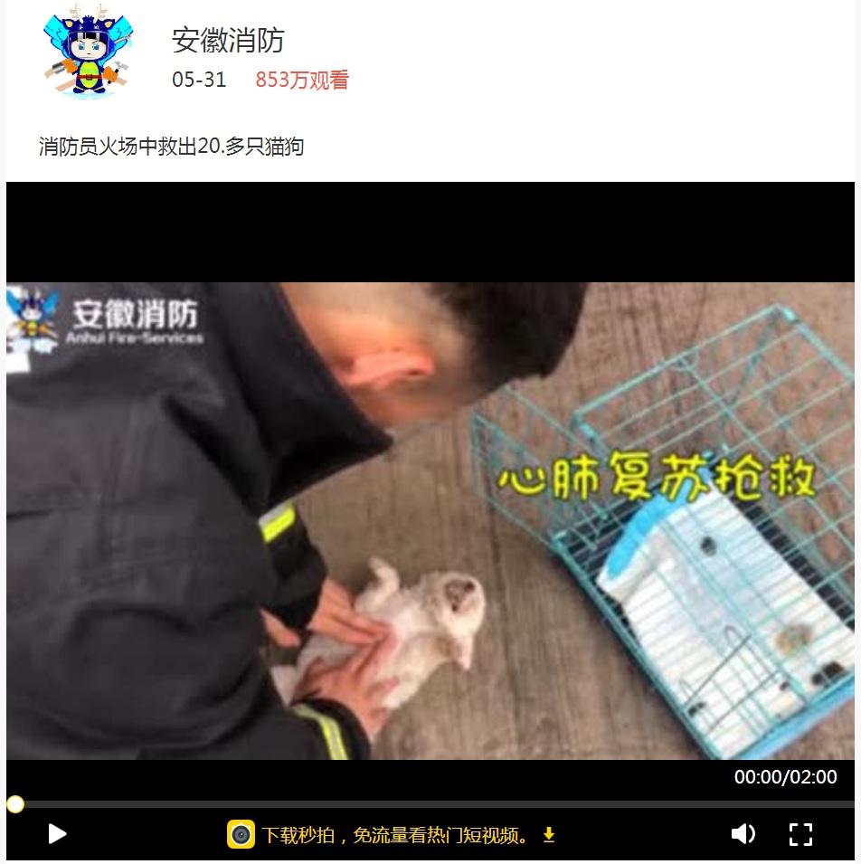 火災発生のペットショップで消防署員が犬猫の救助に尽力(画像は『安徽消防 2018年5月31日付Miaopai「消防员火场中救出20.多只猫狗」』のスクリーンショット)