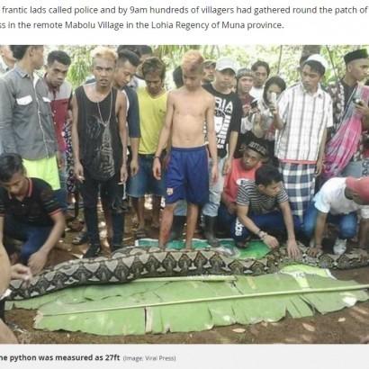 【海外発!Breaking News】8メートル超のヘビが54歳女性を丸飲みに(インドネシア)