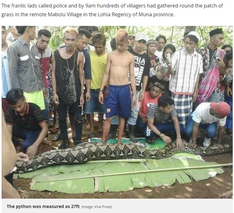 捕獲された8メートル超のヘビ(画像は『Mirror 2018年6月17日付「'It's like a horror movie': Mum-of-two is cut out from 27ft python after she was eaten while gardening」(Image: Viral Press)』のスクリーンショット)