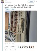 【海外発!Breaking News】25階高層ビルをよじ登ったアライグマ ドキドキの実況中継(米)<動画あり>