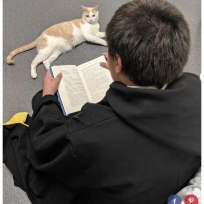 【海外発!Breaking News】「心を開いてくれるまで…」盲目の猫に毎日読み聞かせを続けた男性(米)