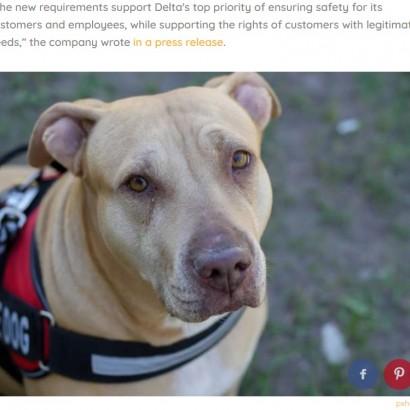 【海外発!Breaking News】デルタ航空、介助及びセラピー犬ピットブルの搭乗全面禁止へ 「取り消して」自閉症男児の母の切なる訴え