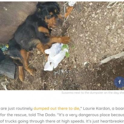 【海外発!Breaking News】障がいを持つ犬、ゴミ置き場から救助され奇跡の回復(米)