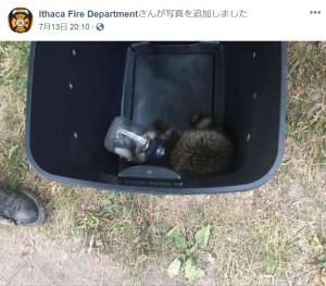 【海外発!Breaking News】マヨネーズの瓶に頭を突っ込んだアライグマ、消防署員らが救出(米)