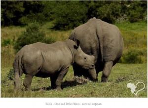 残された子サイ(画像は『Kragga Kamma Game Park 2018年6月23日付Facebook「Rhino Protection - Dehorning」』のスクリーンショット)