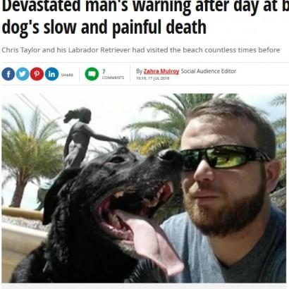 【海外発!Breaking News】海に愛犬を連れて行った飼い主の悲劇 獣医も警告「犬のビーチ遊びは2時間までに」(米)