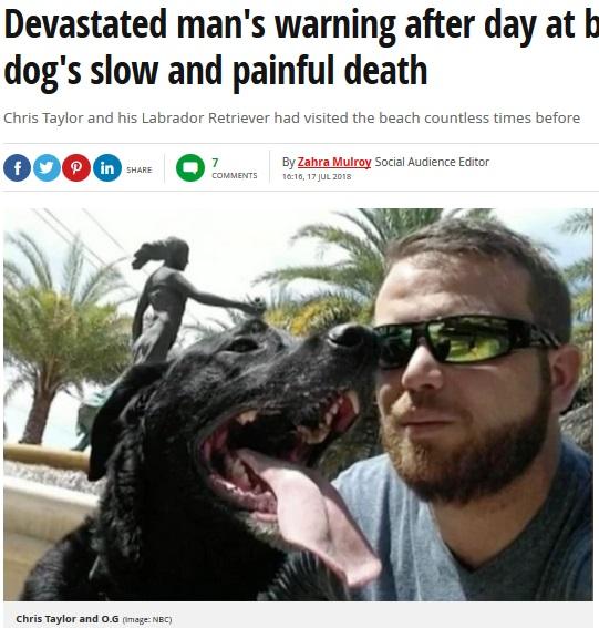 ビーチ遊びの後、愛犬を失った飼い主(画像は『Mirror 2018年7月18日付「Devastated man's warning after day at beach ends in his dog's slow and painful death」(Image: NBC)』のスクリーンショット)
