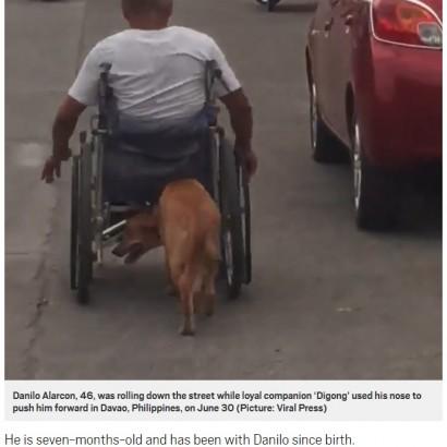 【海外発!Breaking News】事故で半身不随になった飼い主の車椅子を押す犬(フィリピン)<動画あり>