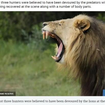 【海外発!Breaking News】サイを狙った密猟者ら、飢えたライオンの餌食に(南ア)