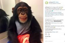 【海外発!Breaking News】動物園のチンパンジー、母親代わりに育ててくれたカップルに会うたび大喜び(米)<動画あり>