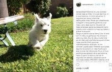 【海外発!Breaking News】フォロワー集めか 犬をドラム式洗濯機に閉じ込めて撮影した飼い主(アルゼンチン)