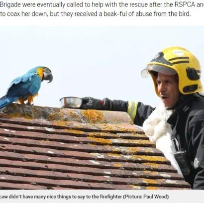 【海外発!Breaking News】屋根の上のコンゴウインコ、救出に来た消防隊員に一言「失せろ!」(英)