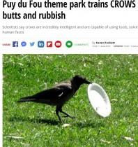 【海外発!Breaking News】カラスがゴミ拾いで活躍中! フランスの大型テーマパークで