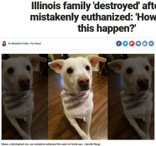 【海外発!Breaking News】預かった犬を手違いで安楽死させた動物管理施設に飼い主激怒(米)