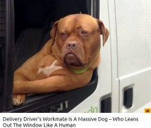 【海外発!Breaking News】英ロンドン市内でちょっと有名な宅配スタッフの犬 飼い主は「いい用心棒にもなる」