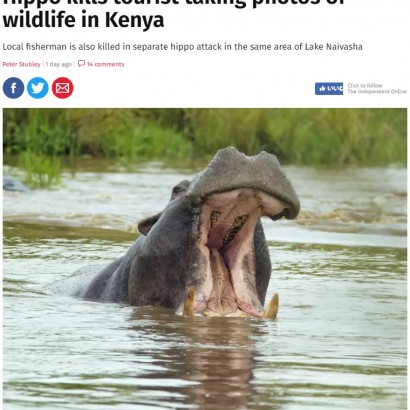 【海外発!Breaking News】野生のカバ、写真撮影していた中国人観光客を襲い死なせる(ケニア)