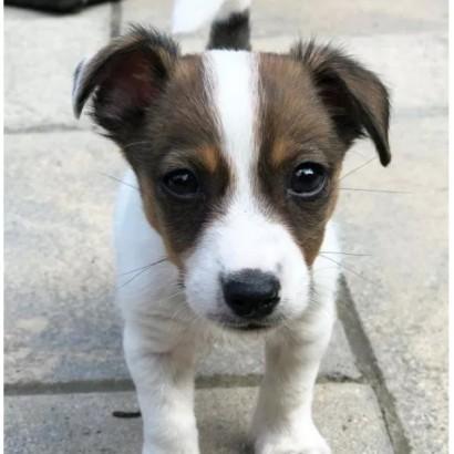 【海外発!Breaking News】ネット購入した子犬を「やっぱり要らない」と数時間後に手放す(英)