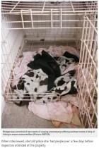 【海外発!Breaking News】餓死させた犬2匹と暮らしていた女、動物虐待で逮捕(英)