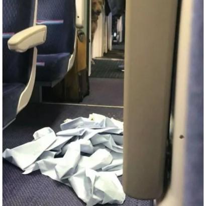 【海外発!Breaking News】電車内で犬が排泄 掃除をしない鉄道職員に乗客が怒り(英)