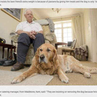 【海外発!Breaking News】視聴覚障害の男性、盲導犬協会から「太らせすぎ」と犬を奪われる危機に(英)