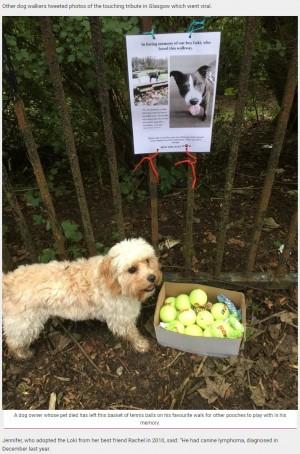 【海外発!Breaking News】「ペットとの時間を大切にして」愛犬を亡くした飼い主、散歩道に追悼メッセージ(英)