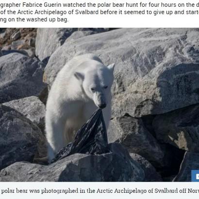 【海外発!Breaking News】空腹のホッキョクグマ、北極圏に漂うプラスチックのゴミ袋を噛む