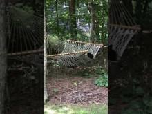 【海外発!Breaking News】庭のハンモックで思いっきりくつろぐクマ(米)<動画あり>