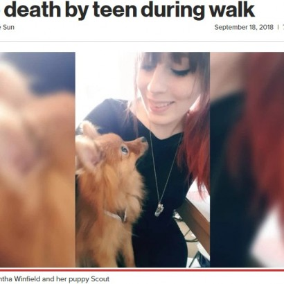 【海外発!Breaking News】ポメラニアンの子犬、散歩中に10代少年グループに蹴り殺される(英)