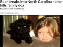 【海外発!Breaking News】自らの命を犠牲にし熊から家族を守った小さな犬(米)