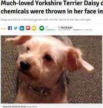 【海外発!Breaking News】何者かが愛犬に化学薬品浴びせ安楽死に 捜査官「どれだけ辛い思いをしたか」(英)