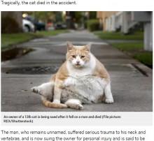 【海外発!Breaking News】8階から落下した猫が直撃 男性が脊椎と首に重傷(伊)