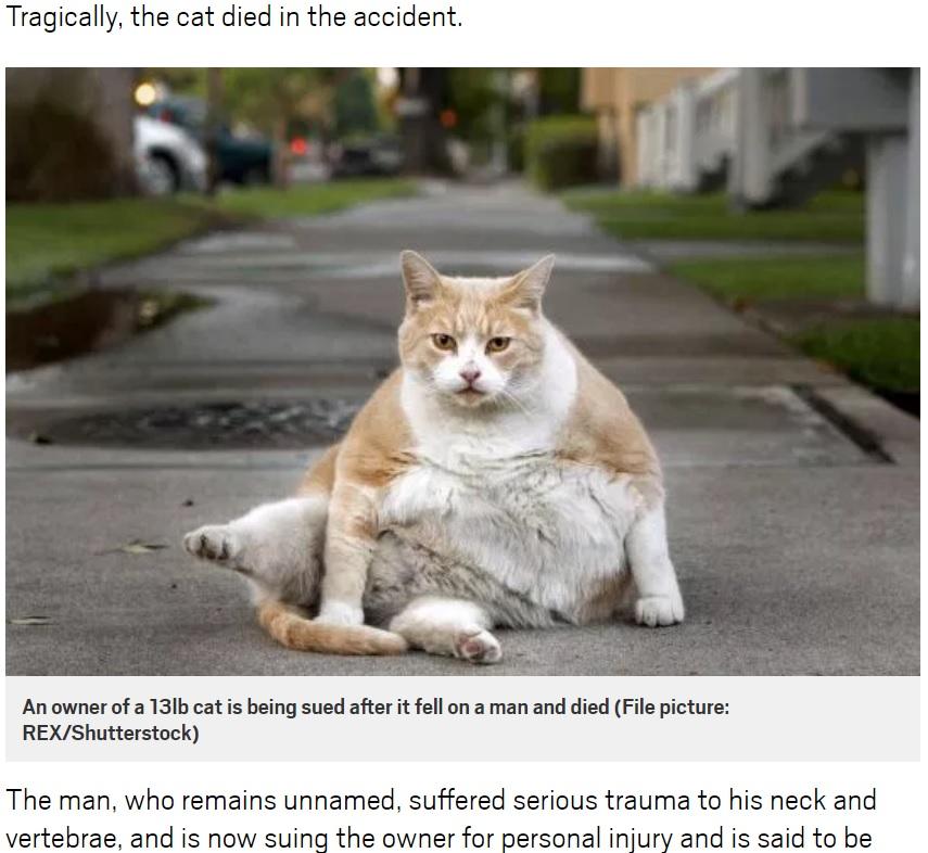 頭上から猫が落下、男性が大怪我(写真はイメージ)(画像は『Metro 2018年9月6日付「Man sues woman after her cat died falling on his head」(File picture: REX/Shutterstock)』のスクリーンショット)