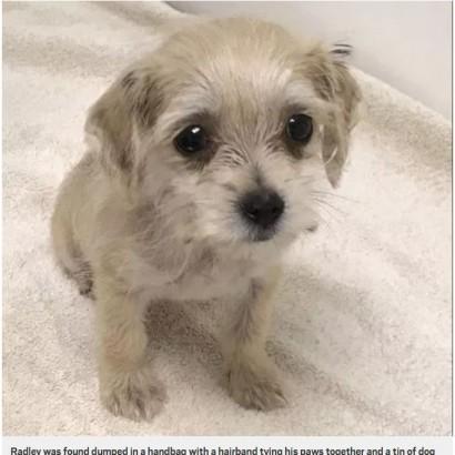 【海外発!Breaking News】ハンドバッグの中で足を縛られ捨てられていた子犬にバッグのブランド名を命名(英)