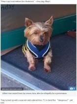 【海外発!Breaking News】「人に噛みついた為」虐待環境から引き取り大切にしていた小犬を警察に押収された高齢女性に同情の声集まる(英)