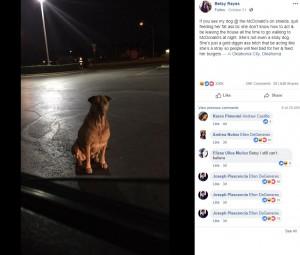 【海外発!Breaking News】毎晩マクドナルドで迷い犬のふりをしてハンバーガーをねだる犬(米)